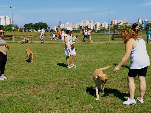 Treinamento para cães Parque Villa Lobos